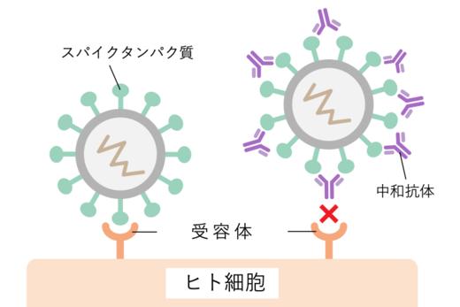 中和抗体の働き.png