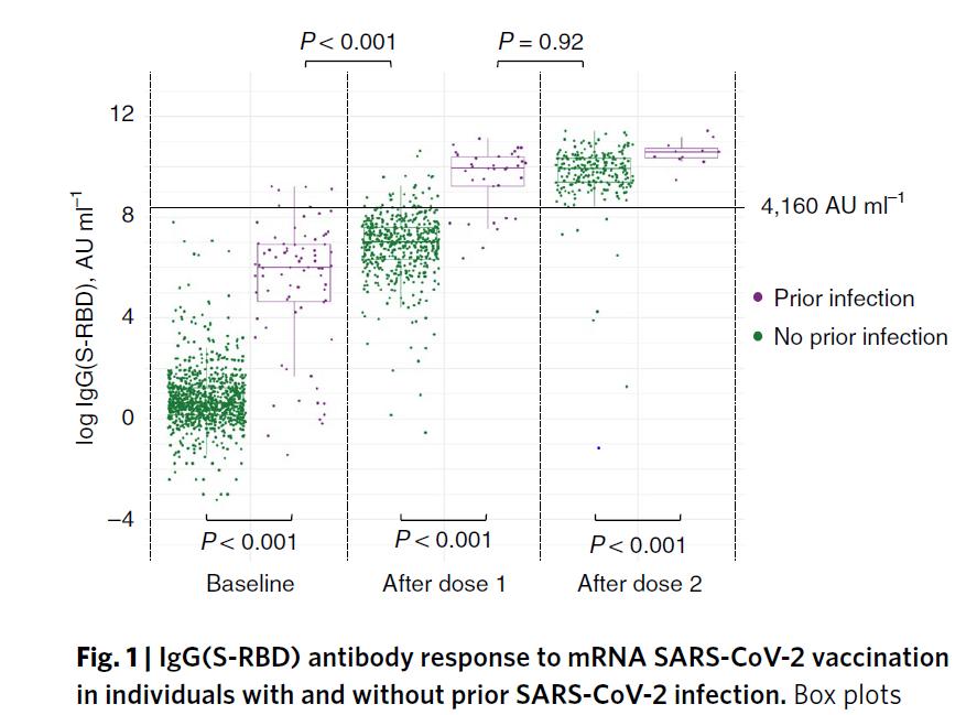 図12:過去のSARS-CoV-2 感染有無に関わらず、mRNA SARS-CoV-2 ワクチン接種に対する IgG(S-RBD) 抗体反応の分布
